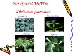 Ядовитые растения ЭТО НУЖНО ЗНАТЬ! ландыш вороний глаз дурман красавка