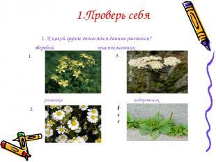 1. К какой группе относятся данные растения? зверобой тысячелистник Проверь себя