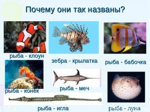 Почему они так названы? рыба - игла рыба - клоун рыба - бабочка рыба - луна зебр