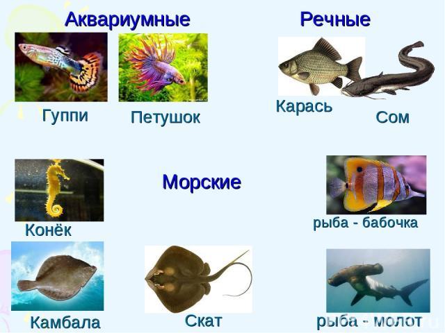 Петушок Камбала Конёк Гуппи Карась Скат Сом рыба - бабочка Аквариумные Речные Морские рыба - молот