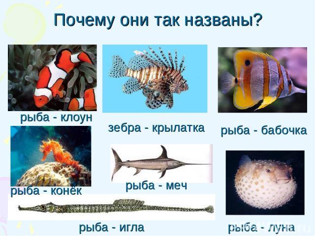 Почему они так названы? рыба - игла рыба - клоун рыба - бабочка рыба - луна зебра - крылатка рыба - конёк рыба - меч