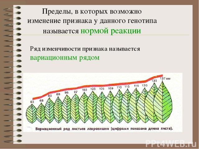 Пределы, в которых возможно изменение признака у данного генотипа называется нормой реакции Ряд изменчивости признака называется вариационным рядом