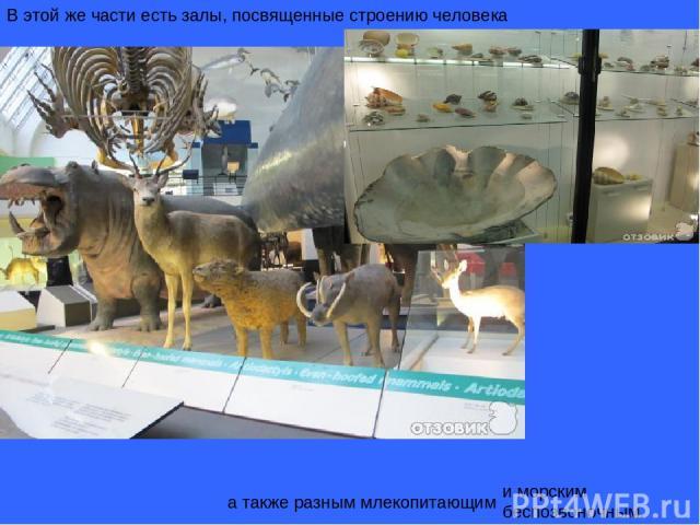 В этой же части есть залы, посвященные строению человека а также разным млекопитающим и морским беспозвоночным.