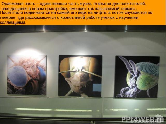 Оранжевая часть – единственная часть музея, открытая для посетителей, находящаяся в новом пристройке, вмещает так называемый «кокон». Посетители поднимаются на самый его верх на лифте, а потом спускаются по галерее, где рассказывается о кропотливой …