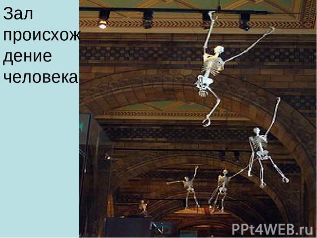 Зал происхождение человека