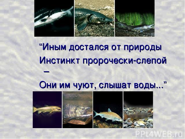 """""""Иным достался от природы Инстинкт пророчески-слепой – Они им чуют, слышат воды..."""" Ф.И. Тютчев"""