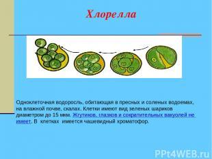 Хлорелла Одноклеточная водоросль, обитающая в пресных и соленых водоемах, на вла