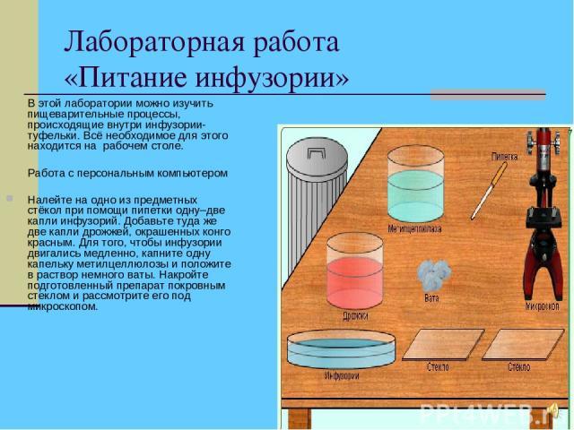 Лабораторная работа «Питание инфузории» В этой лаборатории можно изучить пищеварительные процессы, происходящие внутри инфузории-туфельки. Всё необходимое для этого находится на рабочем столе. Работа с персональным компьютером Налейте на одно из пре…