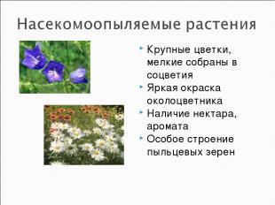 Крупные цветки, мелкие собраны в соцветия Яркая окраска околоцветника Наличие не