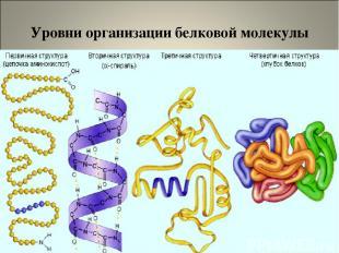 Уровни организации белковой молекулы