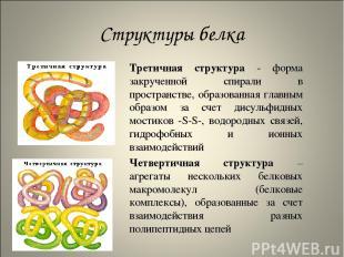 Структуры белка Третичная структура - форма закрученной спирали в пространстве,