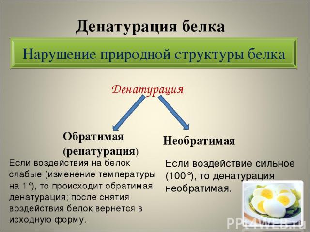 Денатурация белка Денатурация Нарушение природной структуры белка Обратимая (ренатурация) Необратимая Если воздействия на белок слабые (изменение температуры на 1°), то происходит обратимая денатурация; после снятия воздействия белок вернется в исхо…
