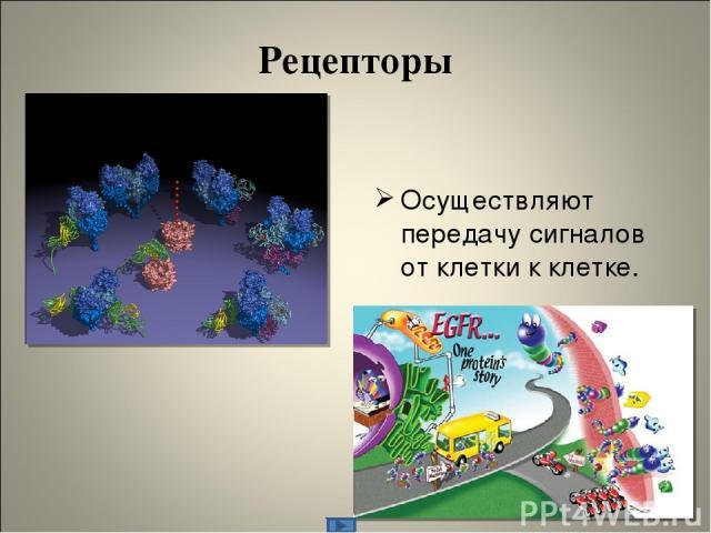 Рецепторы Осуществляют передачу сигналов от клетки к клетке.