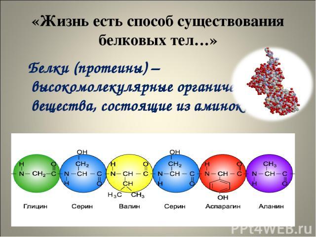 «Жизнь есть способ существования белковых тел…» Белки (протеины) – высокомолекулярные органические вещества, состоящие из аминокислот.