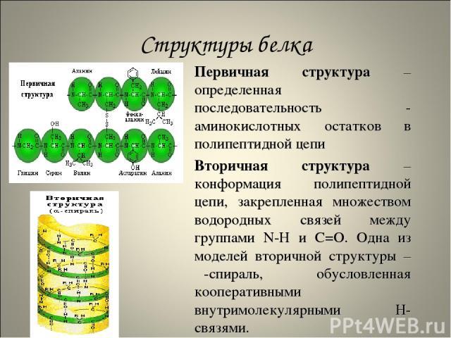 Структуры белка Первичная структура – определенная последовательность α-аминокислотных остатков в полипептидной цепи Вторичная структура – конформация полипептидной цепи, закрепленная множеством водородных связей между группами N-H и С=О. Одна из мо…