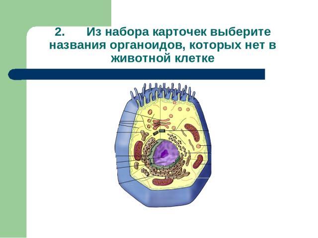 2. Из набора карточек выберите названия органоидов, которых нет в животной клетке