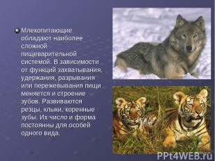 Млекопитающие обладают наиболее сложной пищеварительной системой. В зависимости