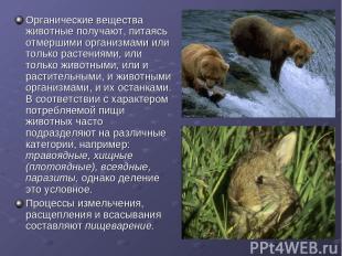 Органические вещества животные получают, питаясь отмершими организмами или тольк