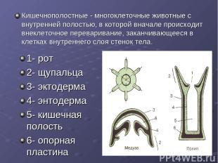 1- рот 2- щупальца 3- эктодерма 4- энтодерма 5- кишечная полость 6- опорная плас