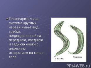 Пищеварительная система круглых червей имеет вид трубки, подразделенной на перед