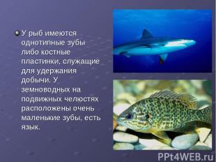 У рыб имеются однотипные зубы либо костные пластинки, служащие для удержания доб