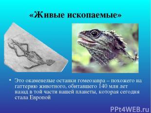 «Живые ископаемые» Это окаменелые останки гомеозавра – похожего на гаттерию живо