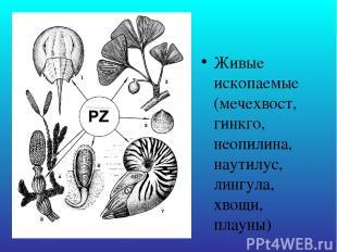 Живые ископаемые (мечехвост, гинкго, неопилина, наутилус, лингула, хвощи, плауны