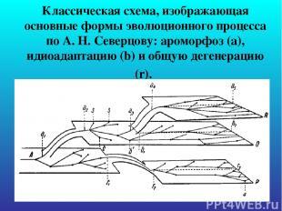 Классическая схема, изображающая основные формы эволюционного процесса по А. Н.