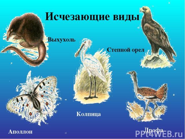 Исчезающие виды Выхухоль Аполлон Колпица Дрофа Степной орел