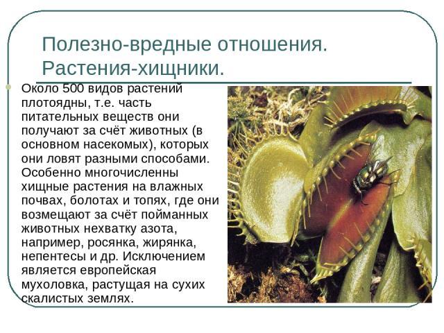 Полезно-вредные отношения. Растения-хищники. Около 500 видов растений плотоядны, т.е. часть питательных веществ они получают за счёт животных (в основном насекомых), которых они ловят разными способами. Особенно многочисленны хищные растения на влаж…