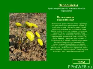 Первоцветы Мать-и-мачеха обыкновенная назад Краткая характеристика наиболее типи
