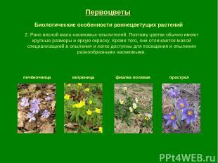 Первоцветы Биологические особенности раннецветущих растений печёночница ветрениц