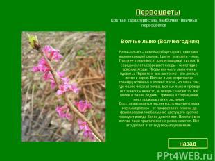 Первоцветы Волчье лыко (Волчеягодник) назад Краткая характеристика наиболее типи
