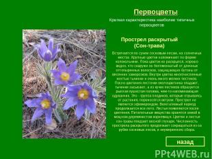 Первоцветы Прострел раскрытый (Сон-трава) назад Краткая характеристика наиболее