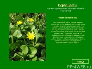 Первоцветы Чистяк весенний назад Краткая характеристика наиболее типичных первоц