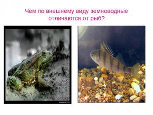 Чем по внешнему виду земноводные отличаются от рыб?