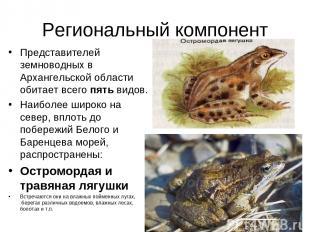Региональный компонент Представителей земноводных в Архангельской области обитае