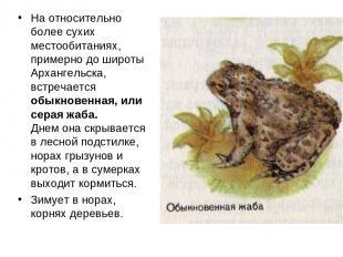 На относительно более сухих местообитаниях, примерно до широты Архангельска, вст