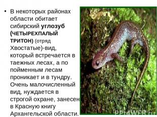 В некоторых районах области обитает сибирский углозуб (ЧЕТЫРЕХПАЛЫЙ ТРИТОН) (отр