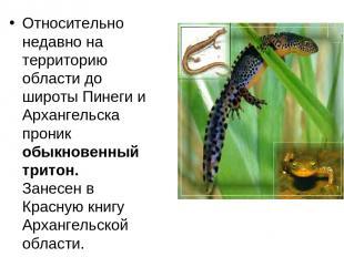 Относительно недавно на территорию области до широты Пинеги и Архангельска прони