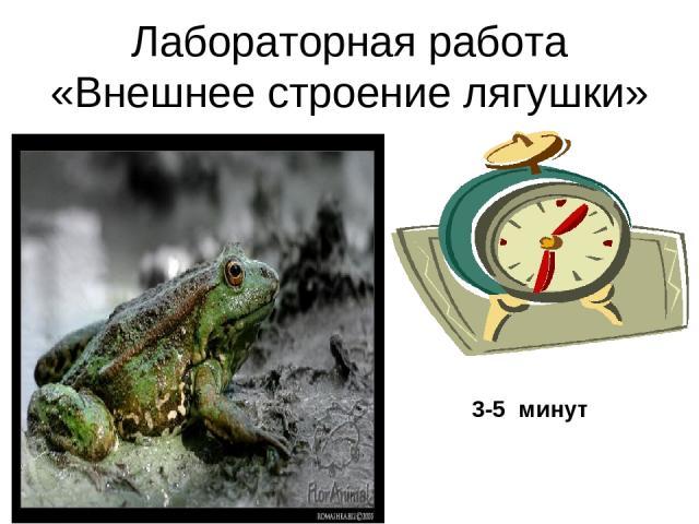 Лабораторная работа «Внешнее строение лягушки» 3-5 минут