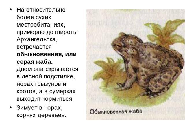 На относительно более сухих местообитаниях, примерно до широты Архангельска, встречается обыкновенная, или серая жаба. Днем она скрывается в лесной подстилке, норах грызунов и кротов, а в сумерках выходит кормиться. Зимует в норах, корнях деревьев.