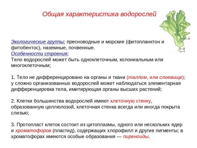 Экологические группы: пресноводные и морские (фитопланктон и фитобентос), наземные, почвенные. Особенности строения: Тело водорослей может быть одноклеточным, колониальным или многоклеточным; 1. Тело не дифференцировано на органы и ткани (таллом, ил…