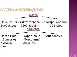 Класс Печеночники Листостебельные Антроцеровые 6000 видов 9500 видов 100 видов п