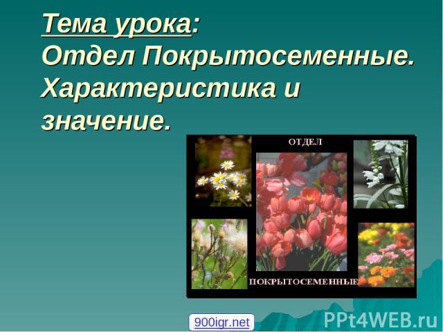 Тема урока: Отдел Покрытосеменные. Характеристика и значение. 900igr.net