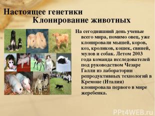 Настоящее генетики Клонирование животных На сегодняшний день ученые всего мира,
