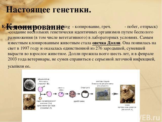 Настоящее генетики. Клонирование Клонирование (англ. clone, cloning - копирование, греч. Κλων - побег, отпрыск) -создание нескольких генетически идентичных организмов путем бесполого размножения (в том числе вегетативного) в лабораторных условиях. С…
