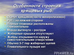 Особенности строения хрящевых рыб: Скелет хрящевой(часто минерализован) Рот - на