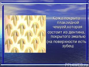 Кожа покрыта плакоидной чешуей,которая состоит из дентина, покрытого эмалью (на