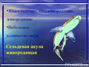 Сельдевая акула живородящая Яйцекладущие, яйцеживородящие, живородящие Небольшое